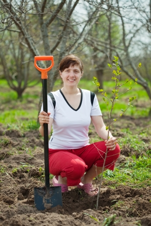 Happy woman planting fruit tree in orchard  photo