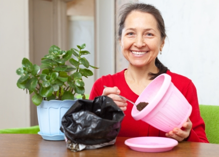 Smiling woman transplants  Kalanchoe flower in flowerpot at her home photo