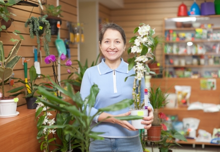 woman chooses Dendrobium orchid  in flower shop Stock Photo - 23718504