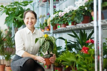 Happy mature woman chooses Aphelandra plant at flower shop photo