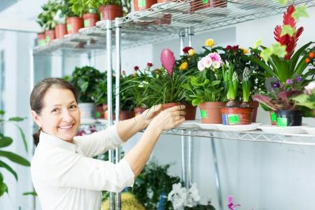 mature woman chooses Tillandsia at flower store photo