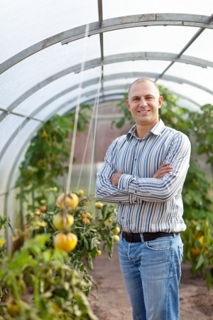 Smiling man with tomatos plant in the hothouse