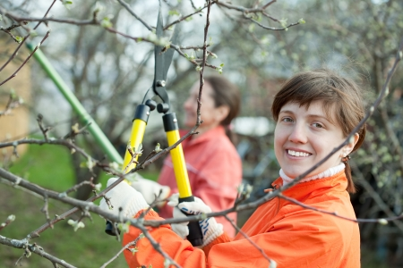 Two women pruned branches in the orchard in spring photo
