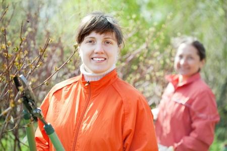 bush trimming:  woman trimming bough of an bush in spring garden