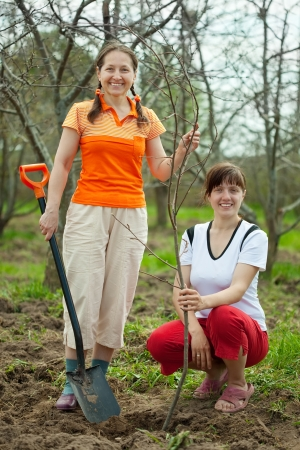 Female gardeners planting tree outdoor in spring photo