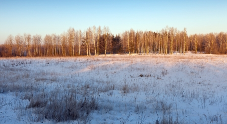beauty winter landscape with birches  in sunny frozen day photo