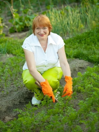 agriculturalist: Mature woman working in field of carrot Stock Photo