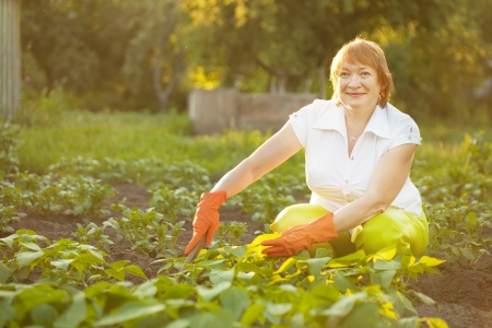 couching: Mature woman working in her vegetable garden