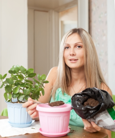 transplants:  woman transplants Kalanchoe plant at  home