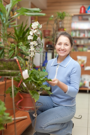 woman chooses Dendrobium orchid  in flower store photo