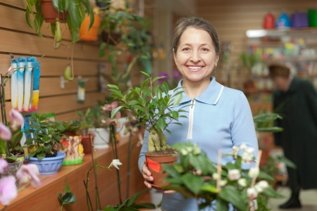 Happy mature woman with ficus plant (Bonsai) in flower store Stock Photo - 25274998
