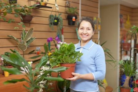 Happy mature woman chooses primula in pot at flower shop photo
