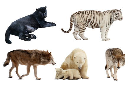 Set of Carnivora mammal. Isolated over white background with shade photo