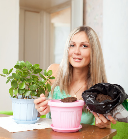 transplants:  woman transplants  Kalanchoe flower at her home