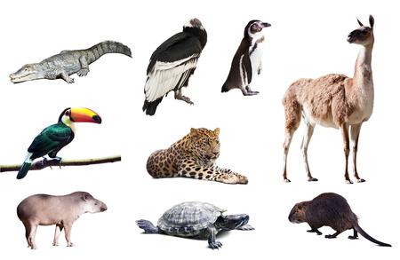 fauna: Fauna de Am�rica del Sur establecen