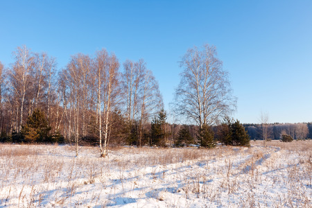 Sunny wintry lanscape with birches in frozen day