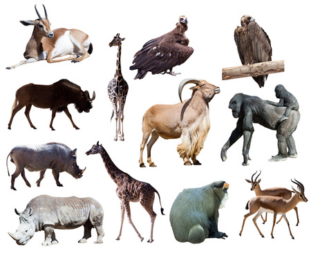 Set of african animals. Isolated on white  Imagens