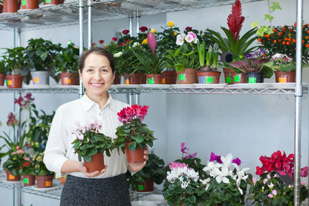 Happy mature woman chooses Cyclamen plant at flower shop photo