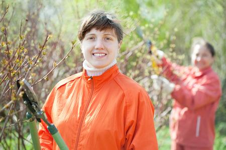 bush trimming: Young woman trimming bough of an bush Stock Photo