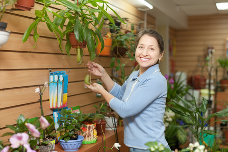 Happy mature woman chooses Nepenthes plant at flower shop photo