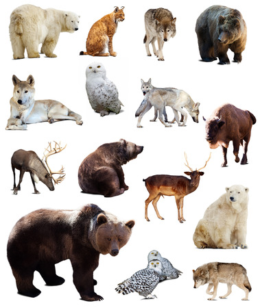 Set of european animals. Isolated over white background with shade photo