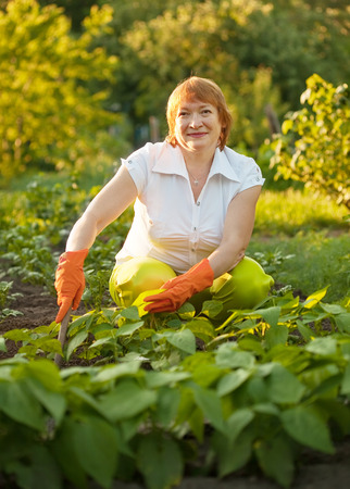 couching: Mature woman working in field of beans