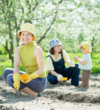 sows: Happy family sows seeds in soil at field