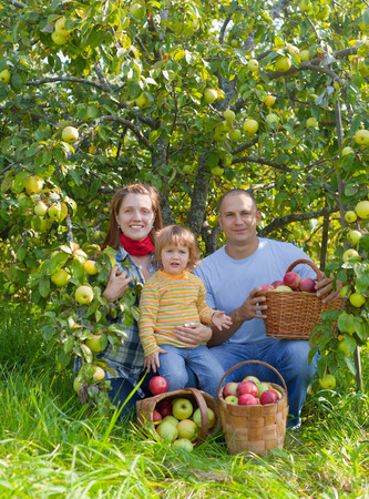 Happy  family  with apple harvest in orchard Stock Photo - 29787446