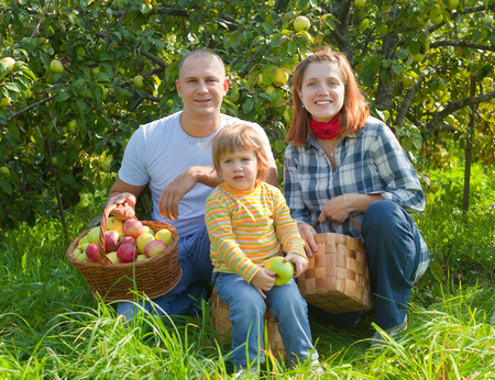 Happy parents and child with baskets of harvested apples in garden Stock Photo - 29787447