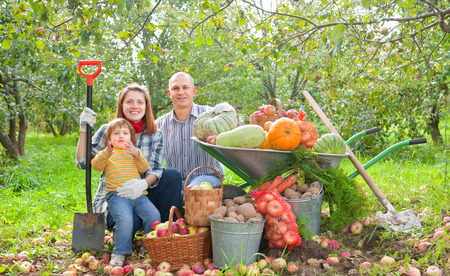 Happy parents and child with  harvested vegetables in garden Stock Photo - 29787448