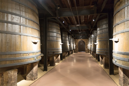 Rows of vertical large wooden barrels in old cellar photo