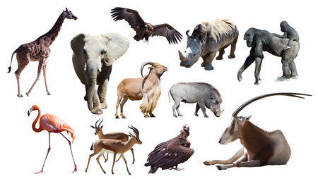 African animals Isolated on white background photo