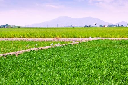 ebro: I campi di riso nel Delta dell'Ebro