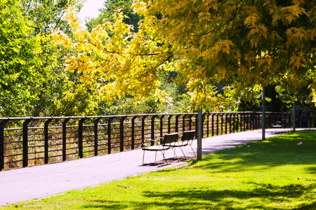 composure: Sunny summer park with bench