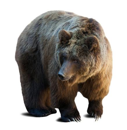 陰で白い背景の上の茶色のクマ