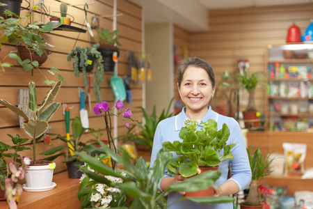 Happy mature woman in the shop surrounded by different flowers photo