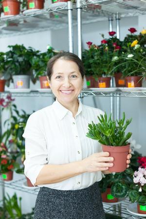 crassula: Female florist with Crassula at flower store  Stock Photo