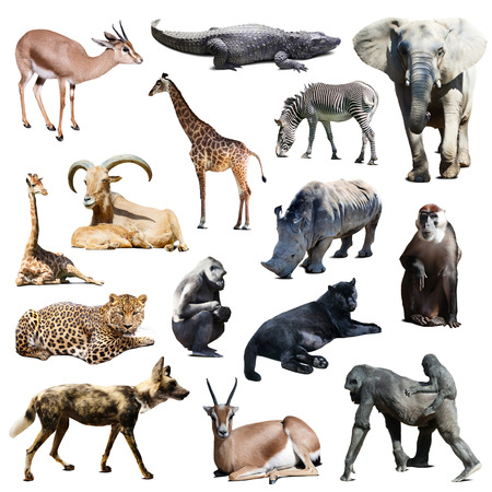 wild: Set of african animals on white background with shade