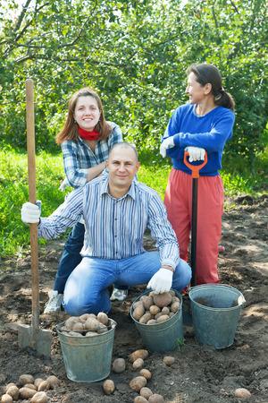 Happy family harvesting potatoes in vegetable garden photo