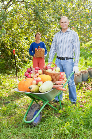 Man and woman  with  harvest  in  vegetables garden photo
