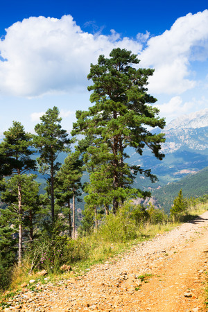 pine trees: pine trees at mountains against vista in summer day