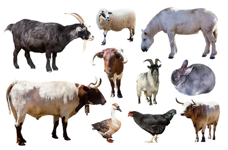 Set of farm animals. Isolated on white Banco de Imagens