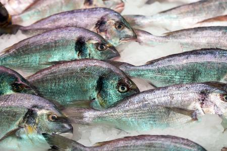 gilthead: gilthead fish on spanish market counter Stock Photo
