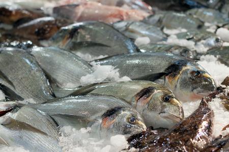 gilthead: gilthead fish on  market counter