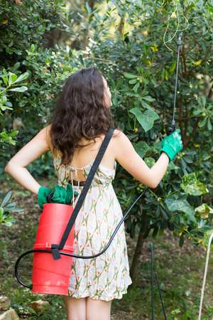 insecticidal: Brunette woman in dress spraying tree plant in orchard