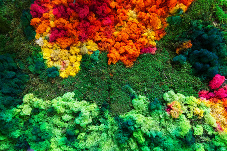phytology: Gifts of nature: colorful lichen and  moss