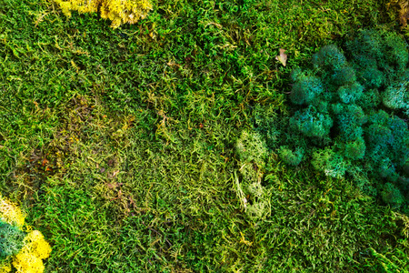 Nature green background. Close-up of pityriasis versicolor and green anophyte photo