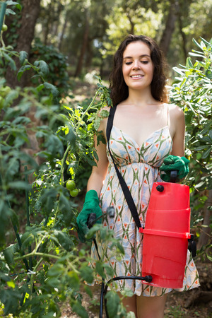 insecticidal: Brunette female gardener spraying tomato plant  with garden spray