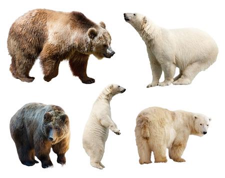 Set of bears. Isolated on white background Zdjęcie Seryjne