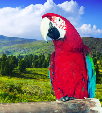 cloude: Red-and-green Macaw (Ara chloropterus) at wildness